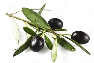 olijf1